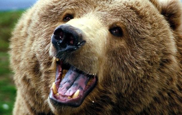 Канадец стал звездой сети после встречи с медведем