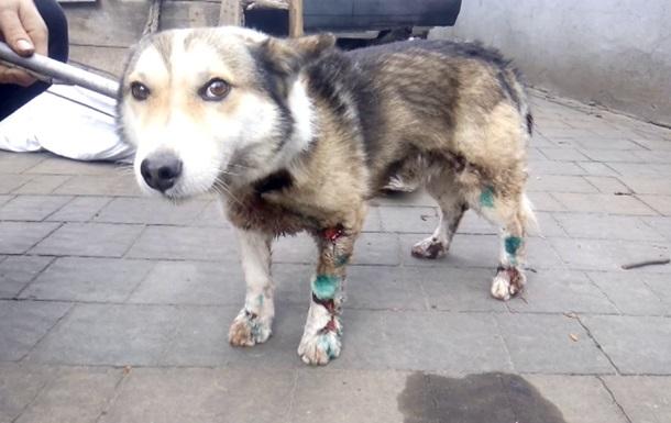 У МВС показали тортури собаки чиновником. 18+