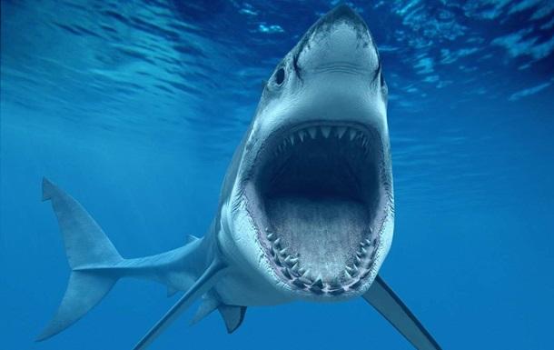 Акула-людожер напала на вченого
