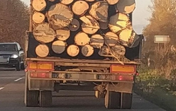 На Закарпатті викрили схему нелегального вивезення деревини в ЄС