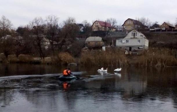 На Київщині врятували 15 лебедів з крижаної пастки