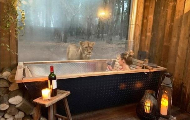 В Британии туристам предлагают номера со львами, тиграми и медведями