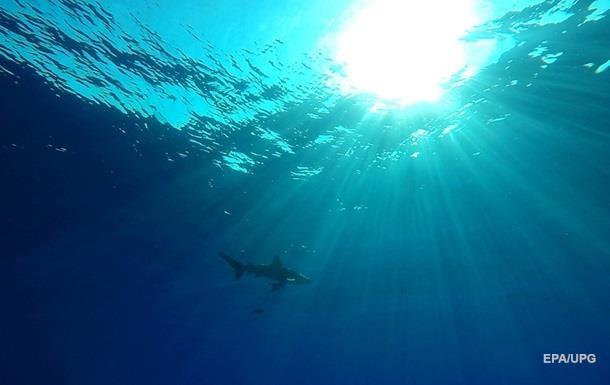 В Ізраїлі акула напала на туриста