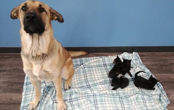 Бездомная собака спасла от смерти котят и прославилась