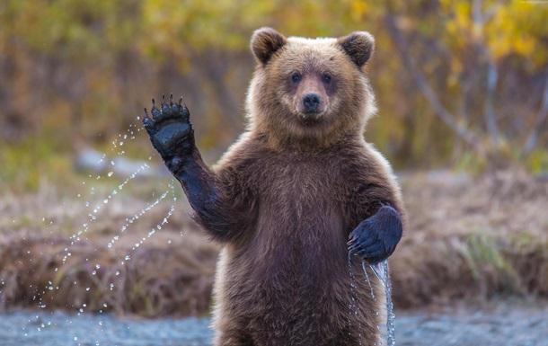 Ведмідь поправив лапою зачіску туристці