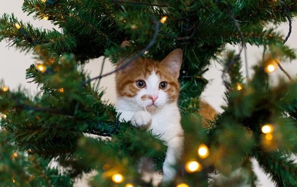 Рождественская ель взяла в  плен  любопытного кота