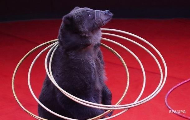 В Черновцах запретили цирки с животными