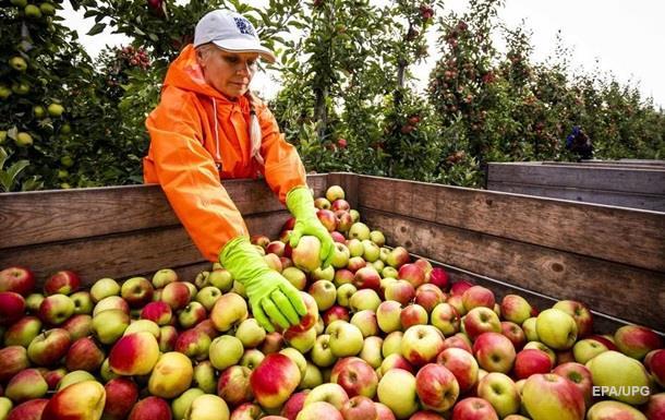 В США вывели сорт яблок, которые год не портятся