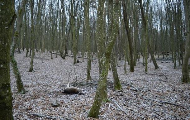 На Волыне в лесничестве убили семь ланей