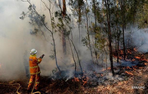 Лісові пожежі в Австралії: оголошено надзвичайний стан