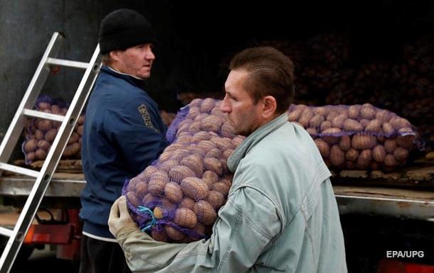 Україна збільшила імпорт картоплі в 700 разів