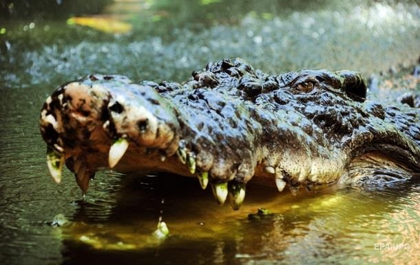 В Індонезії крокодил перекусив чоловіка навпіл