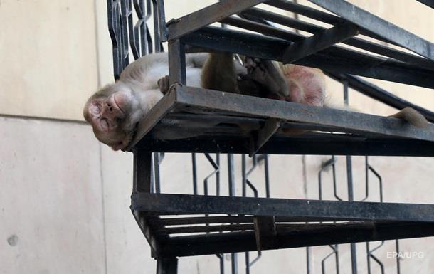 В Харькове обезьяна остановила работу супермаркета