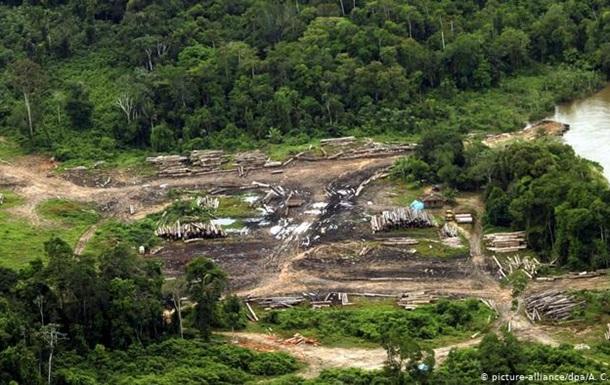 Вирубування лісів Амазонії прискорилося вдвічі