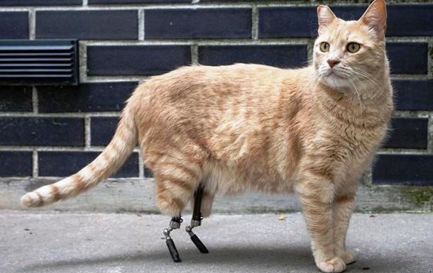 Коту поставили біонічні протези