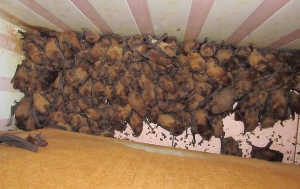Во Львове нашли в квартире 1700 летучих мышей