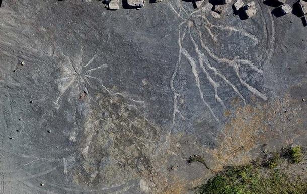У США знайшли сліди найдавнішого лісу