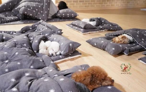 В сети показали детский сад для щенков