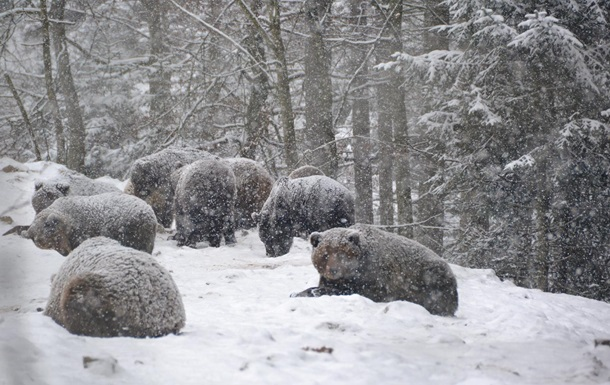 В Карпатах медведи не могут заснуть из-за рекордно теплой зимы