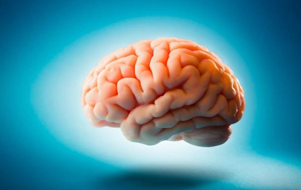 Вчені знайшли скам янілий мозок, якому 500 млн років