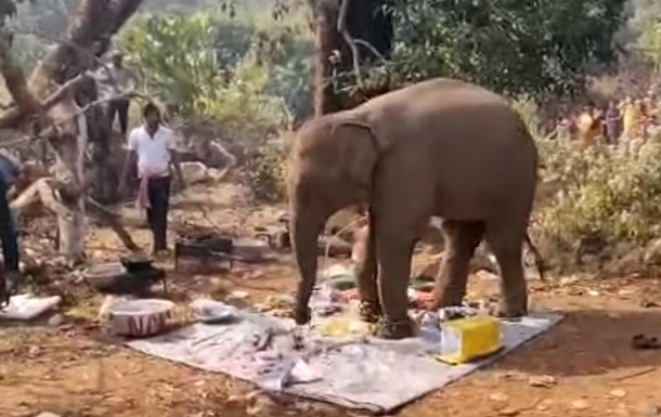 В Индии слон прогнал людей с пикника и съел еду