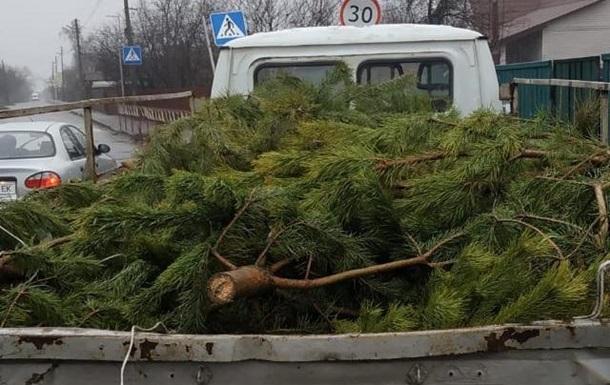Копы показали, как проверяют торговцев елками