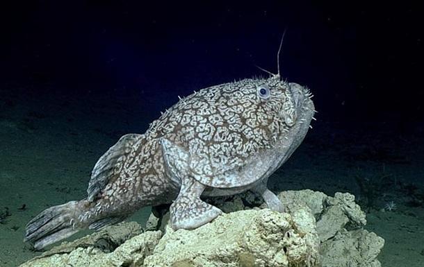Виявлено рибу, яка пересувається на ногах