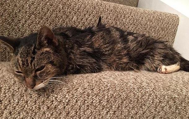 Потерявшийся кот вернулся домой спустя семь лет