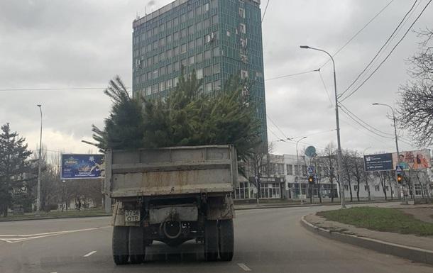 З Одеси вивезли 140 вантажівок покинутих ялинок