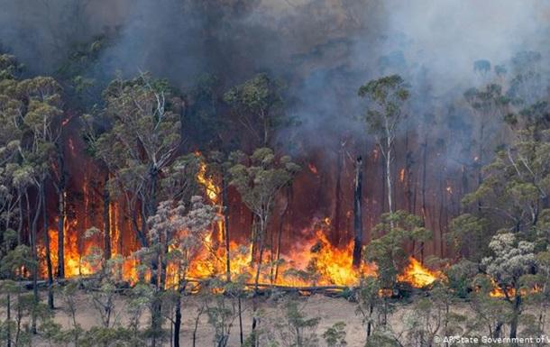 В Австралії лісові пожежі наближаються до Сіднея