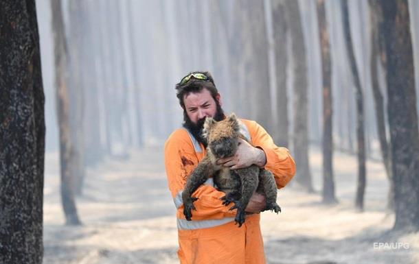 В Австралії вдвічі погіршили оцінку числа загиблих у пожежах тварин