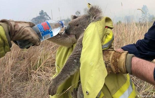 Пожежі в Австралії. Зникнуть цілі види тварин