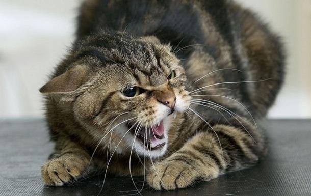 Під Харковом оголосили карантин через скаженого кота