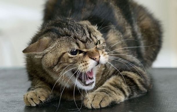 Под Харьковом объявили карантин из-за бешеного кота