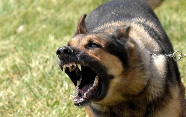 На Кировоградщине бешеный пес искусал прохожих