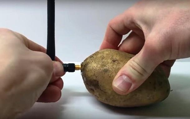 Представлен гаджет для  общения  с картофелем
