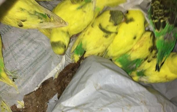 У лісі Харкова знайшли півсотні хворих папуг