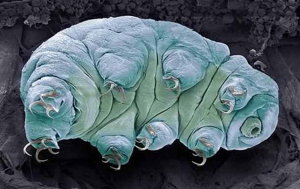 Вчені знайшли слабке місце невразливих істот