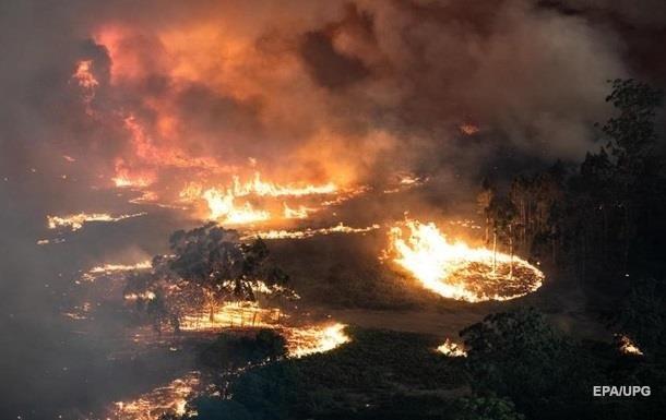 На восстановление после пожаров Австралии понадобится сто лет
