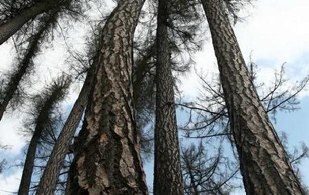 Ученые раскрыли секрет долголетия деревьев