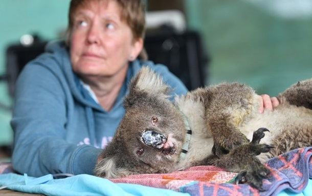 Пожары в Австралии: открыт госпиталь для животных