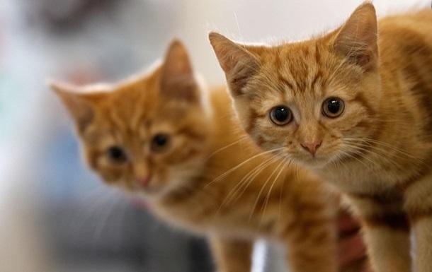 Коти можуть їсти людські трупи - вчені