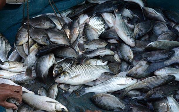 Вылов рыбы в водоемах Украины увеличился