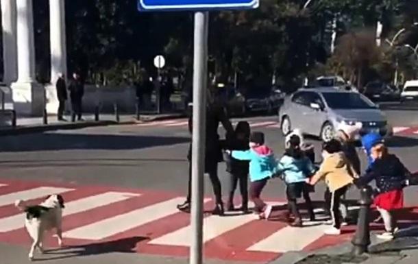 Пес перевів дітей через дорогу і вигавкав водіїв