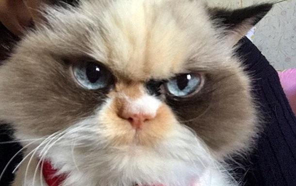 В сети нашли  реинкарнацию  Grumpy Cat