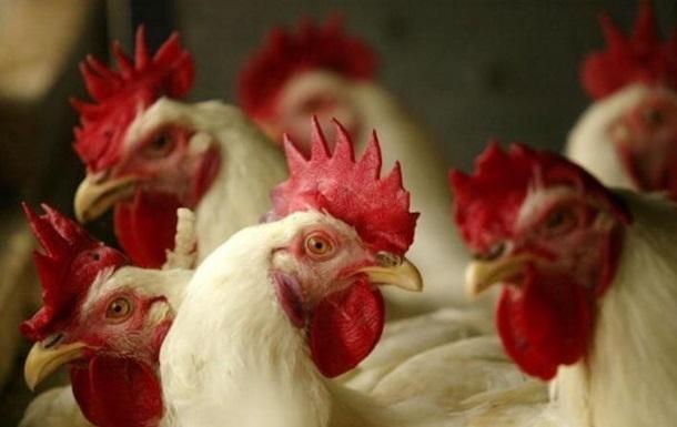Вспышка птичьего гриппа зафиксирована в Китае
