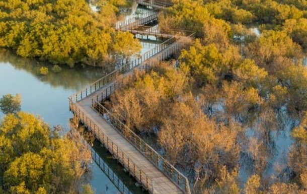 В Абу-Даби открыли мангровый парк