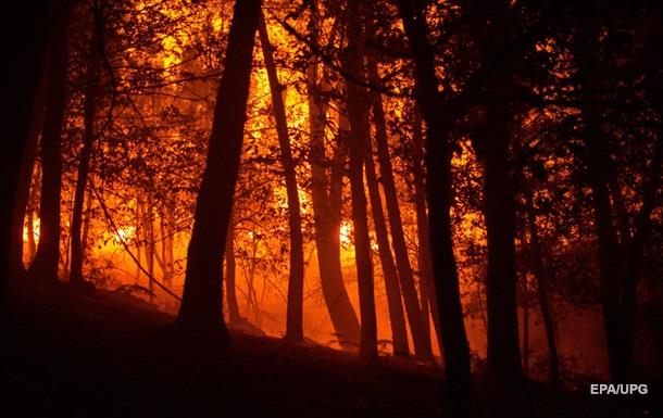Штрафы за лесные пожары увеличили вдвое
