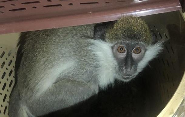 В Харькове обезьяна напугала посетителей ТЦ