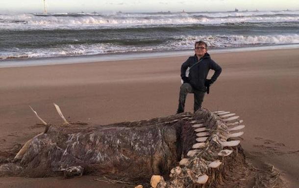 У Шотландії на берег викинуло скелет  лохнеського чудовиська